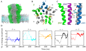 T3 interactions with GABA(A) receptor