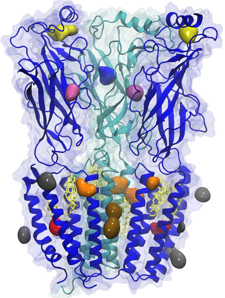 Isoflurane binding sites in the nicotinic acetylcholine receptor